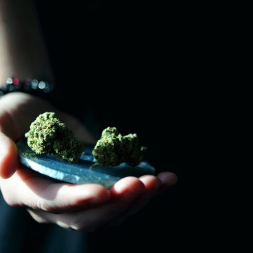 Top 9 Legal Cannabis Online Shops in Europe