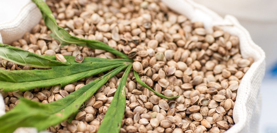CBD Seeds: What You Should Know