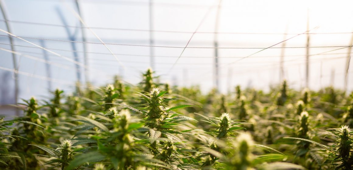The Strongest Hemp Industries in Europe