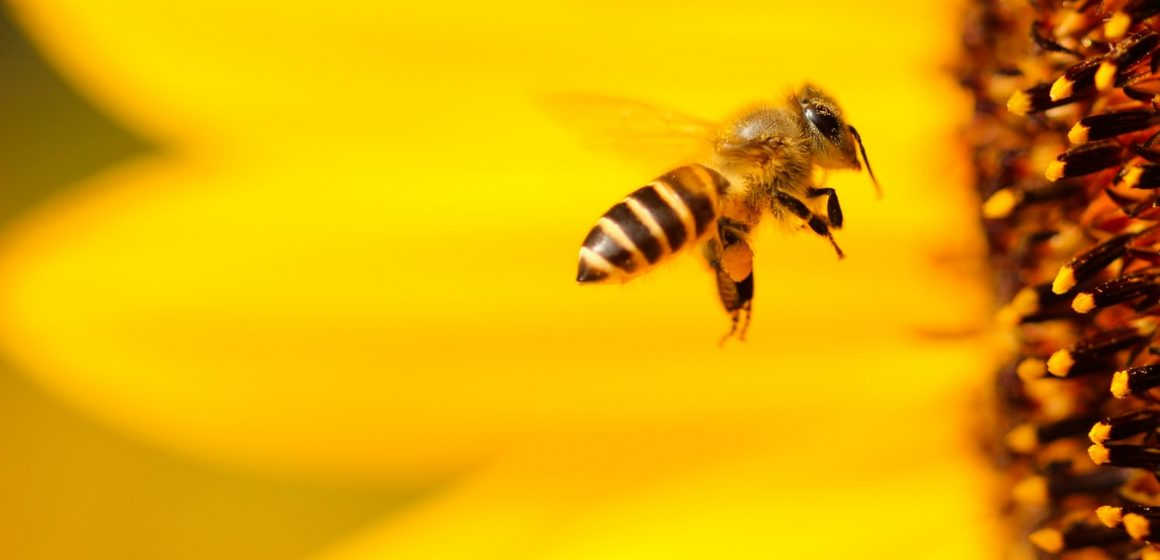 How Cannabis Could Save Bees And Make Your Life Sweeter