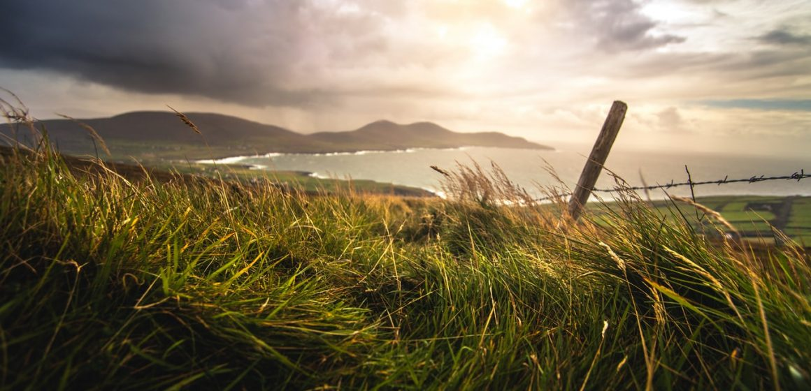Everything You Need to Know About CBD in Ireland