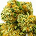 6 Cannabis Strains Growing in Demand Across Canada